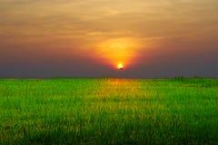 Granja del arroz con el fondo del cielo azul fotos de archivo libres de regalías
