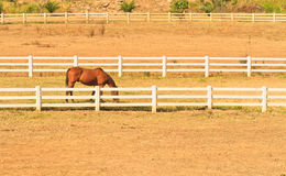 Granja del caballo Fotos de archivo