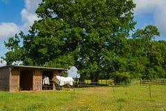Granja del caballo Imágenes de archivo libres de regalías