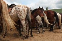 Granja del caballo cerca de Moscú, Rusia foto de archivo libre de regalías