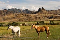 Granja del caballo con paisaje de la montaña fotos de archivo libres de regalías
