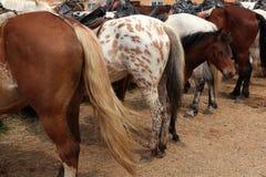 Granja del caballo en Mozhaysk, Rusia Imágenes de archivo libres de regalías