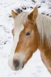 Granja del caballo Head Fotos de archivo libres de regalías