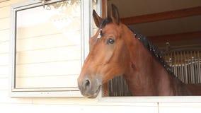 Granja del caballo Head almacen de metraje de vídeo