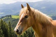 Granja del caballo Head Foto de archivo libre de regalías