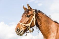 Granja del caballo Head Imagen de archivo libre de regalías