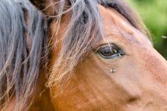 Granja del caballo Head Fotos de archivo