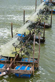 Granja del camarón, Tailandia Fotografía de archivo