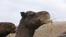 Granja del camello metrajes