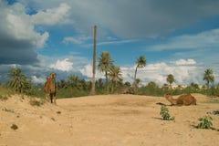 Granja del camello en Djerba Fotos de archivo libres de regalías