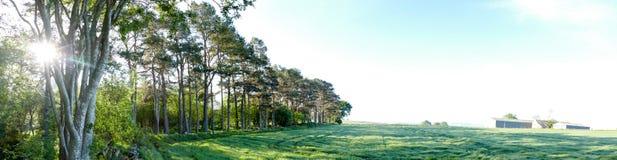 Granja del campo al lado del panorama del bosque imagen de archivo libre de regalías