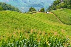 Granja del campo y campos verdes con la pequeña cabaña Fotos de archivo