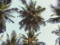 Granja del coco Imagen de archivo