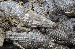 Granja del cocodrilo Fotos de archivo libres de regalías