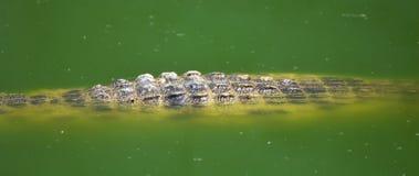 Granja del cocodrilo Fotografía de archivo