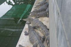 Granja del cocodrilo de Samutprakan Imagenes de archivo