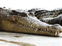 Granja del cocodrilo. Tailandia. Foto de archivo libre de regalías