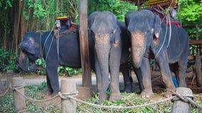 Granja del elefante en Asia para los turistas que caminan animales en el servicio de la gente viaje y turismo en Asia almacen de metraje de vídeo