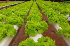 Granja del hidrocultivo de las verduras Foto de archivo