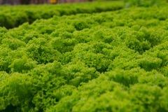 Granja del hidrocultivo de las verduras Fotos de archivo libres de regalías