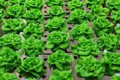 Granja del hidrocultivo de las verduras Imagen de archivo
