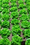 Granja del hidrocultivo de las verduras Fotos de archivo