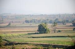 Granja del maíz Foto de archivo
