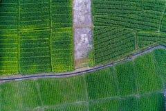 Granja del maíz de Topview con poco canal en el centro fotografía de archivo libre de regalías