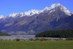 Granja del paraíso, Nueva Zelandia Foto de archivo