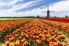 Granja del tulipán del color del arco iris Foto de archivo libre de regalías