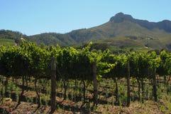 Granja del vino Imagen de archivo libre de regalías