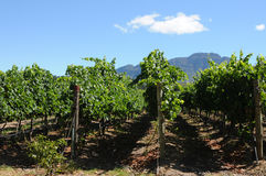 Granja del vino Imagenes de archivo