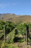 Granja del vino Fotografía de archivo