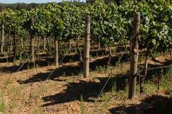 Granja del vino Fotos de archivo