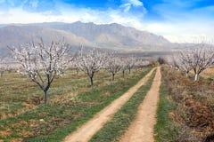 Granja durante la estación sping, Armenia del albaricoque fotos de archivo libres de regalías
