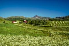 Granja en Noruega Imagen de archivo