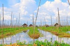 Granja flotante del lago Inle, Myanmar imagenes de archivo