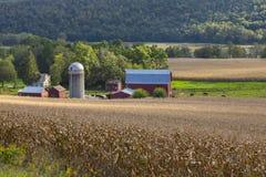 Granja lechera y campo de maíz hermosos Foto de archivo