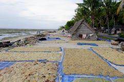 Granja lembongan de la alga marina de Nusa Imagen de archivo libre de regalías