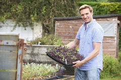 Granja orgánica de Planting Seedlings On del granjero imagenes de archivo