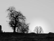 Granja oscura Imagen de archivo