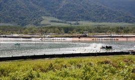 Granja para el cultivo de langostas en Tailandia Fotos de archivo libres de regalías