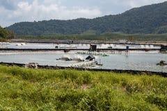 Granja para el cultivo de langostas en Tailandia Foto de archivo