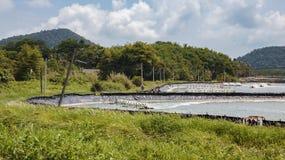 Granja para el cultivo de langostas en Tailandia Foto de archivo libre de regalías