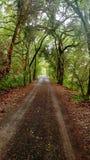 Granja secreta de la familia de Napa Valley del túnel del árbol fotos de archivo