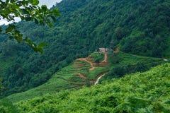 Granja sola de Kvariati del verano de Georgia Ajara en la montaña fotografía de archivo