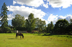 Granja sueca con el caballo árabe Imagen de archivo libre de regalías