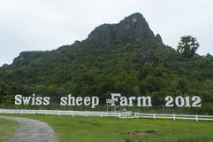 Granja suiza 2012 de las ovejas Fotografía de archivo libre de regalías
