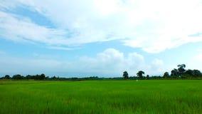 Granja tailandesa Fotografía de archivo