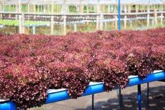Granja vegetal hidropónica Fotos de archivo libres de regalías